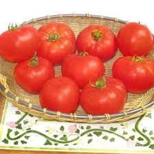 Tomato 'Amelia'-0