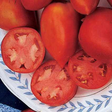 Tomato 'Amish Paste'-0