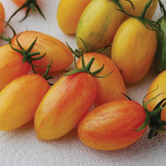Tomato 'Tiger Blush'-0