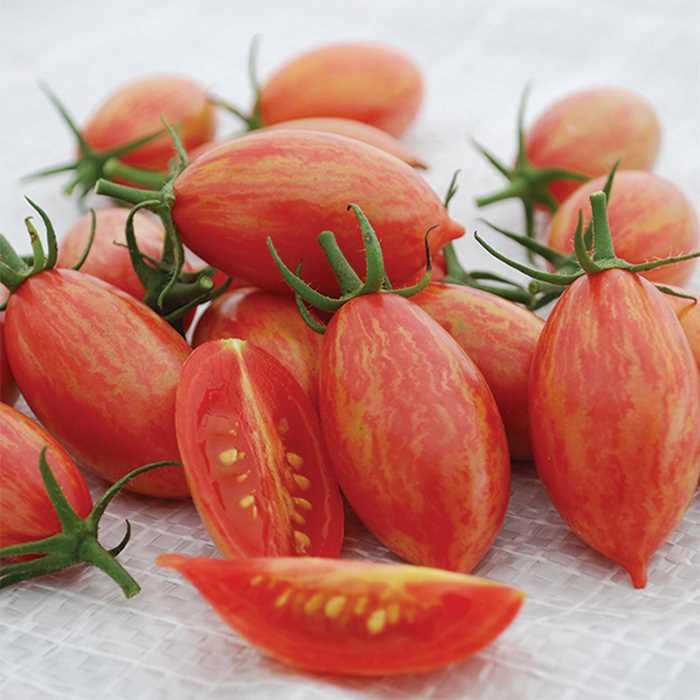 Tomato 'Tiger Pink'-0