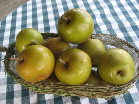 Asian Pears, Fresh Fruit-0