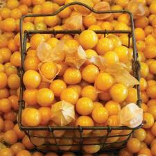 Ground Cherry 'Aunt Molly's'-0
