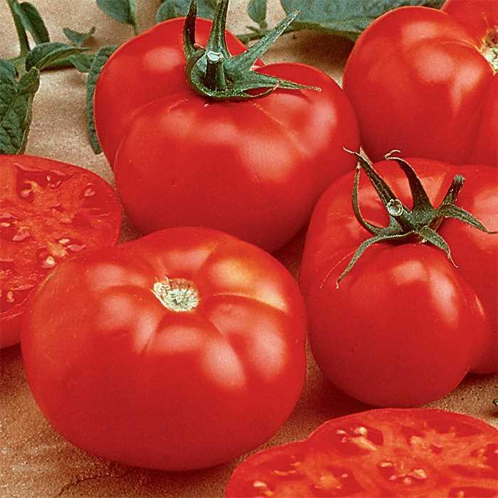 Tomato 'Beefmaster'-0
