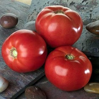 Tomato 'Bella Rosa'-0