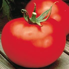 Tomato 'Better Boy'-0