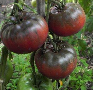 Tomato 'Black from Tula'-0