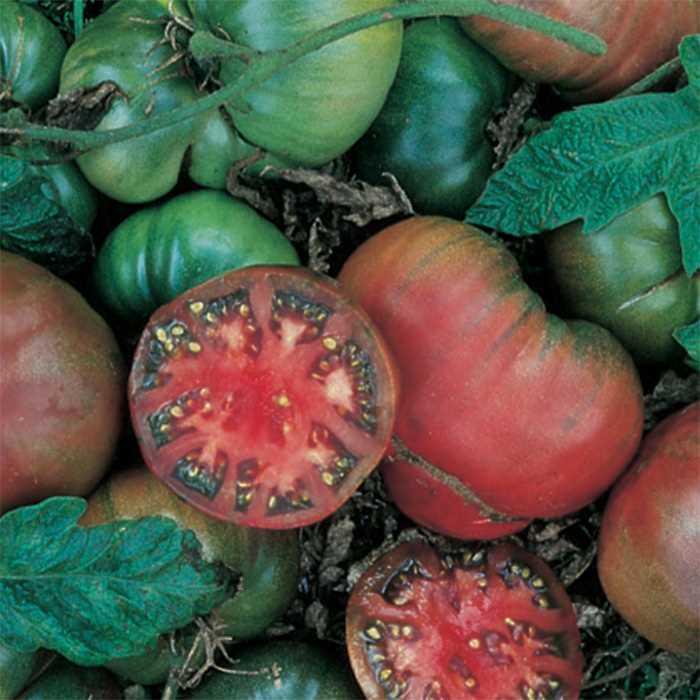 Tomato 'Black Krim'-0
