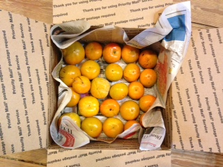 Satsuma Oranges, PRE-ORDER, Pick up November 19 and 20-1669