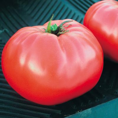Tomato 'Brandywine'-0