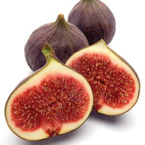 Fig 'Brown Turkey'-1234