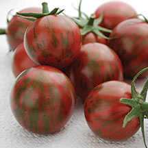 Tomato 'Bumble Bee Purple'-0