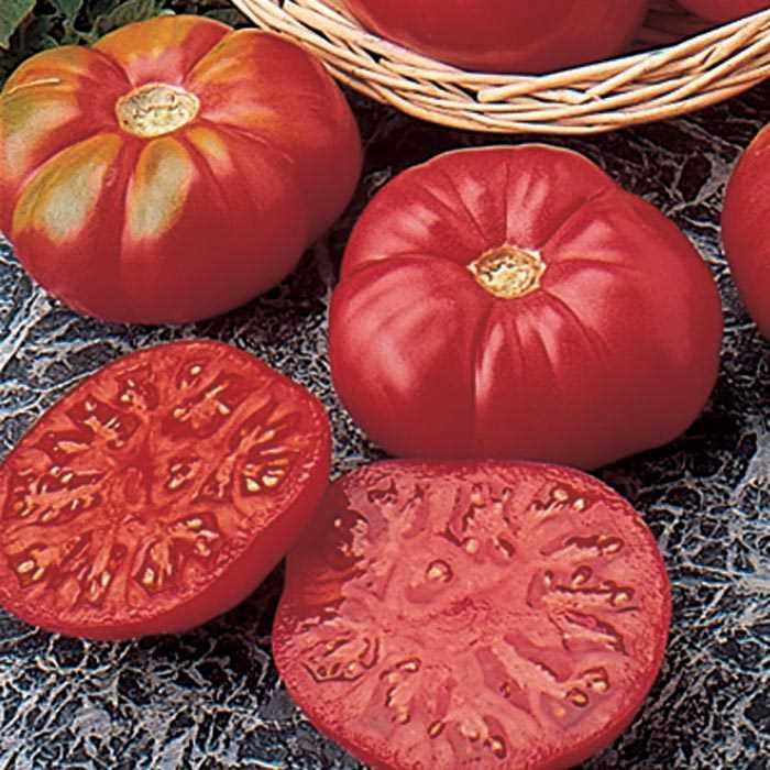 Tomato 'Caspian Pink'-0