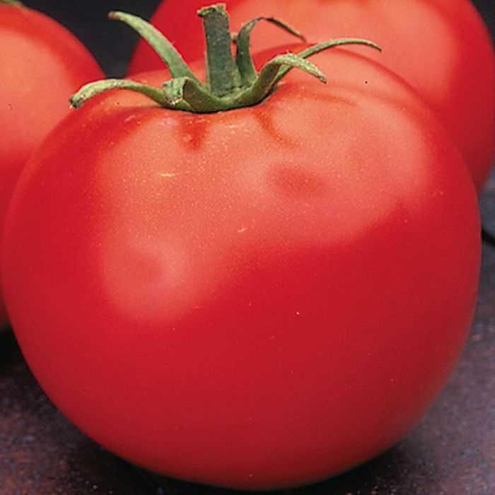Tomato 'Celebrity'-0