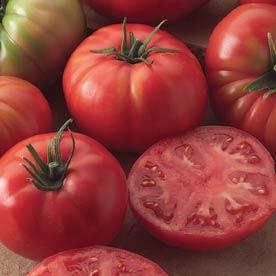 Tomato 'Champion II-0