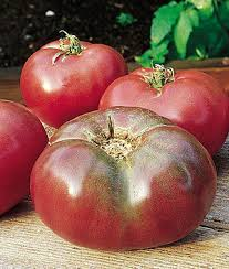 Tomato 'Cherokee Purple'-0