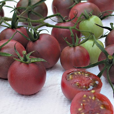 Tomato 'Chocolate Cherry'-0