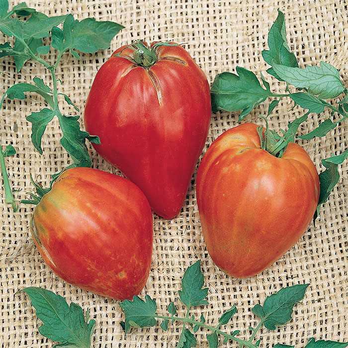 Tomato 'Cuore De Toro'-0