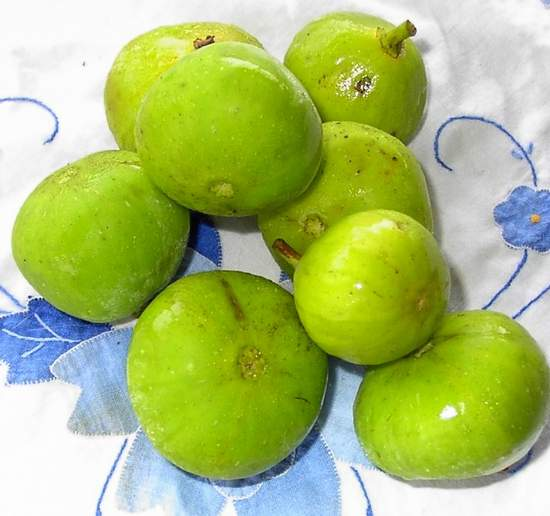 Fig 'Lemon Fig'-1244