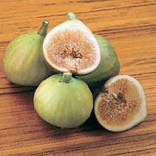 Fig 'Italian Honey Fig'-1242