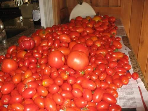 Tomato 'Juliet'-0