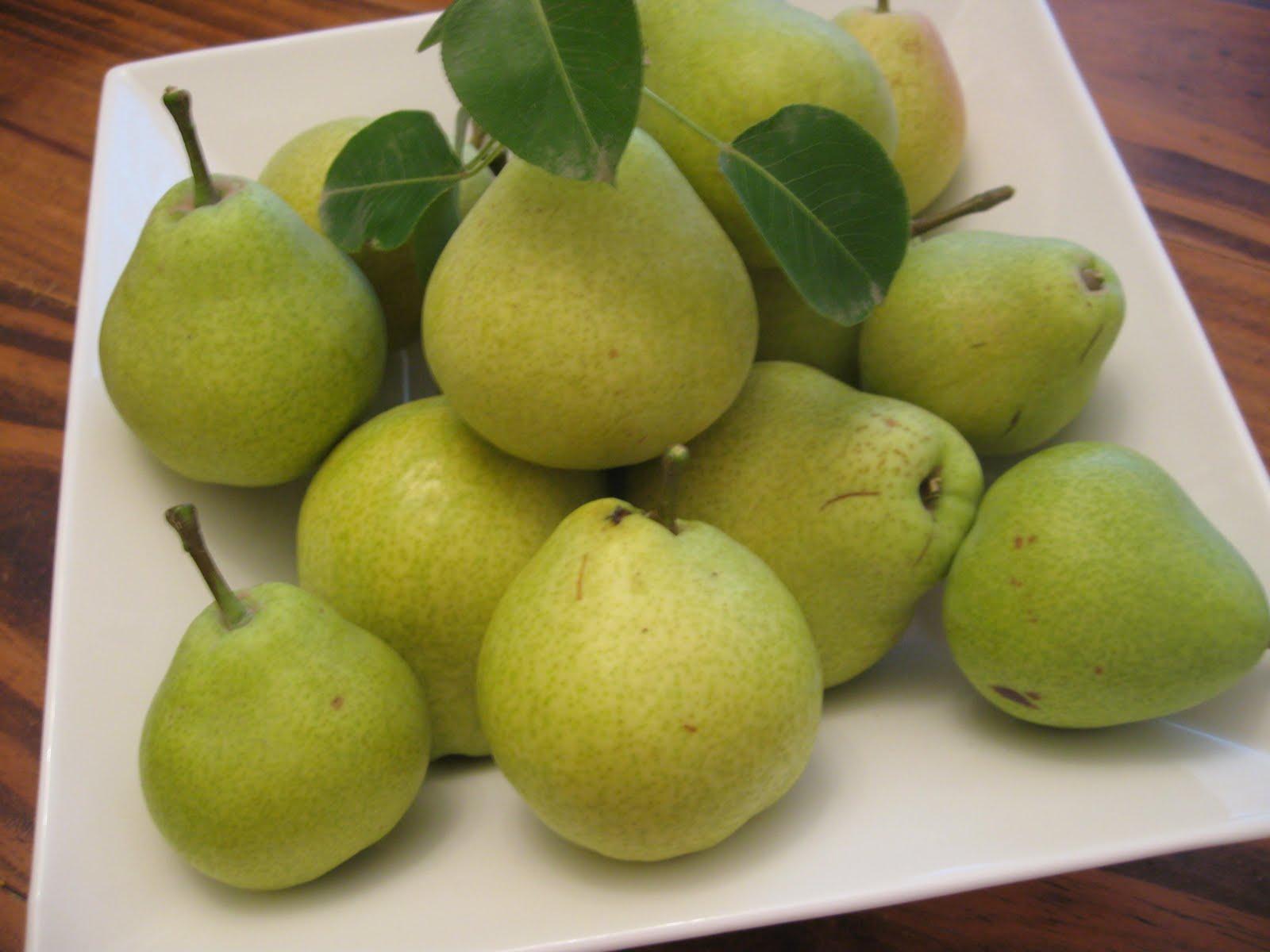 Pear 'Kieffer-1355