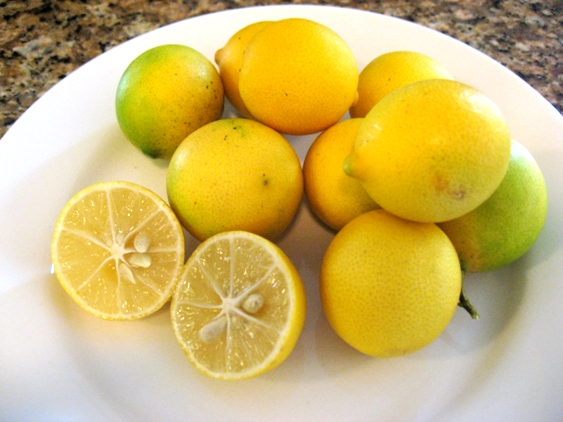 Eustis Limequat 1 gal.-0
