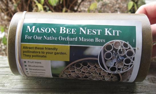 Mason Bee House-0