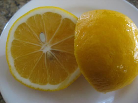 Meyer Lemon - 1 gal-1285