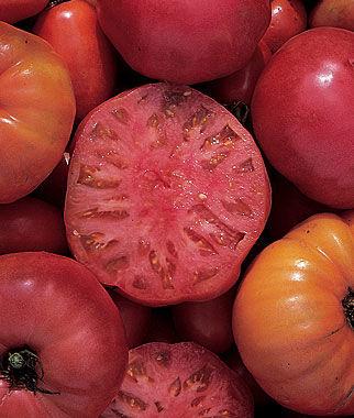 Tomato 'Mortgage Lifter'-0