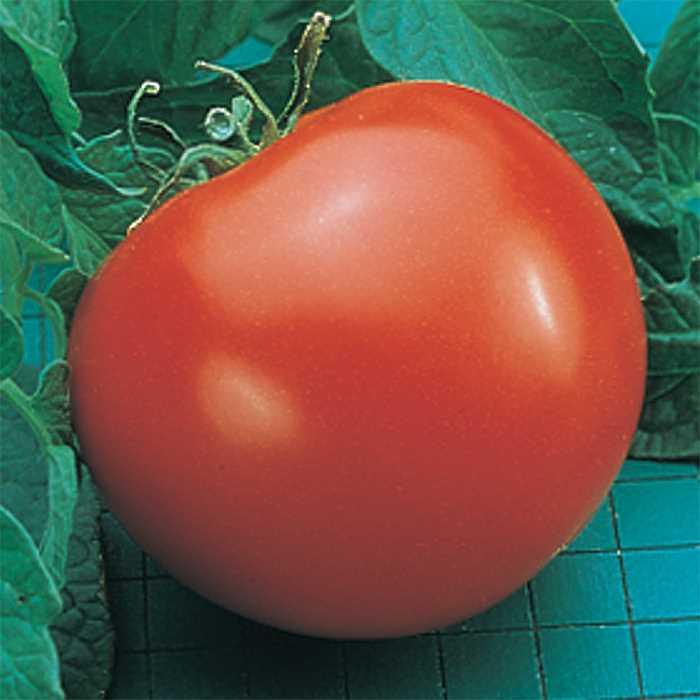 Tomato 'Goliath'-0