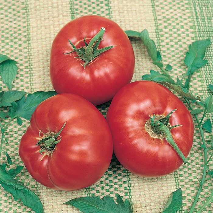Tomato 'Park's Whopper'-0