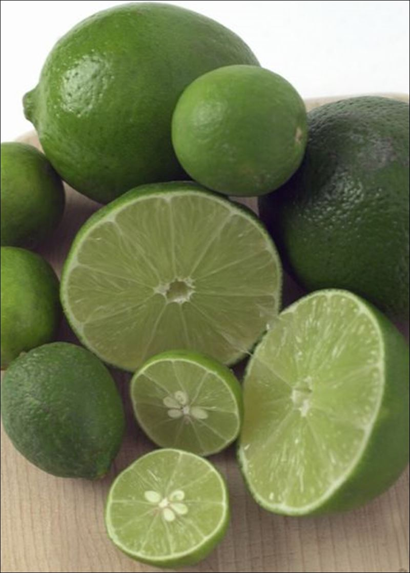 Persian Lime-1288