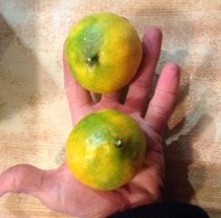 Satsumas, Fresh Fruit-1487
