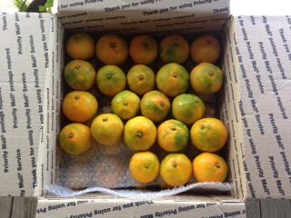 Satsumas, Fresh Fruit-1486