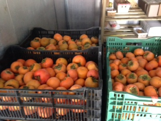 Fuyu Persimmons, Fresh Fruit-0