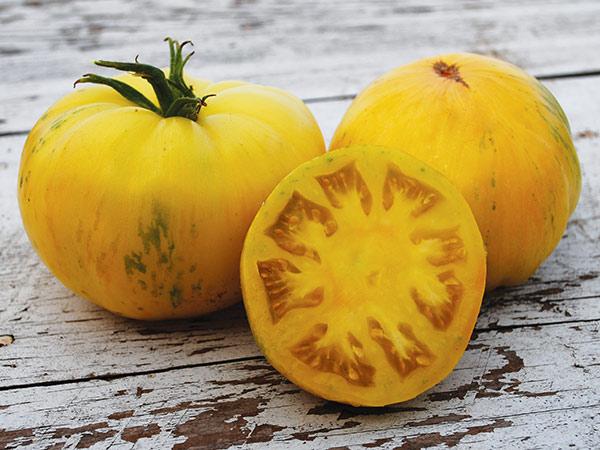 Tomato 'Pineapple Pig'-0