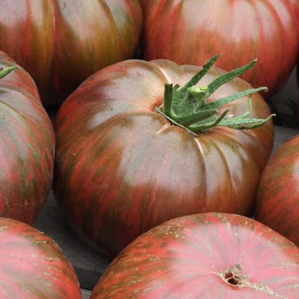 Tomato 'Pink Berkeley Tie-Dye'-0