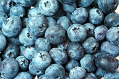 Blueberry 'Powderblue'-1215