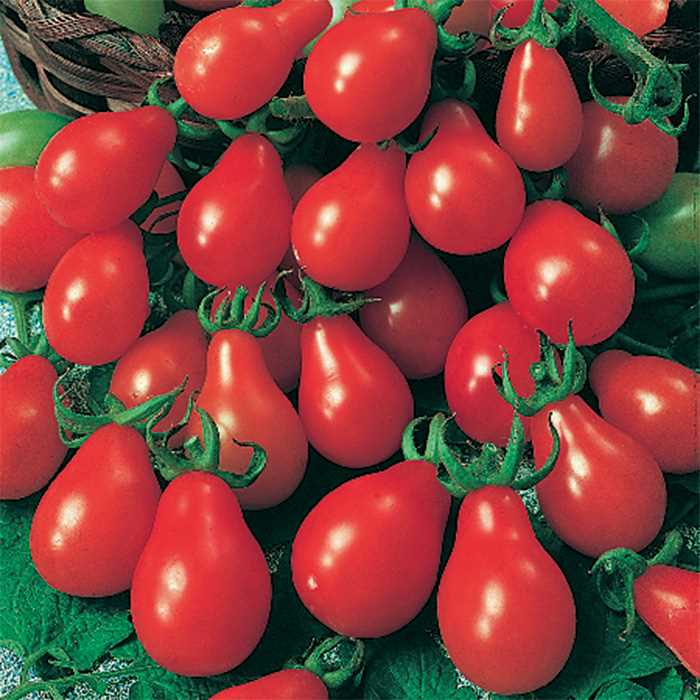 Tomato 'Red Pear'-0