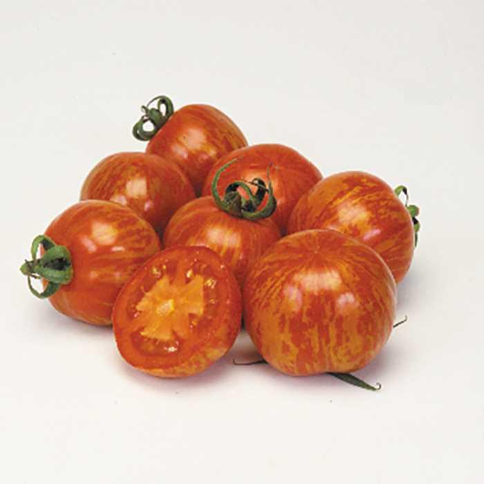 Tomato 'Red Zebra'-0