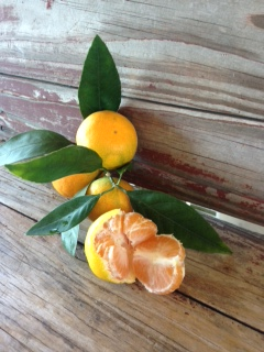 Satsuma Oranges, PRE-ORDER, Pick up December 10 and 11-0