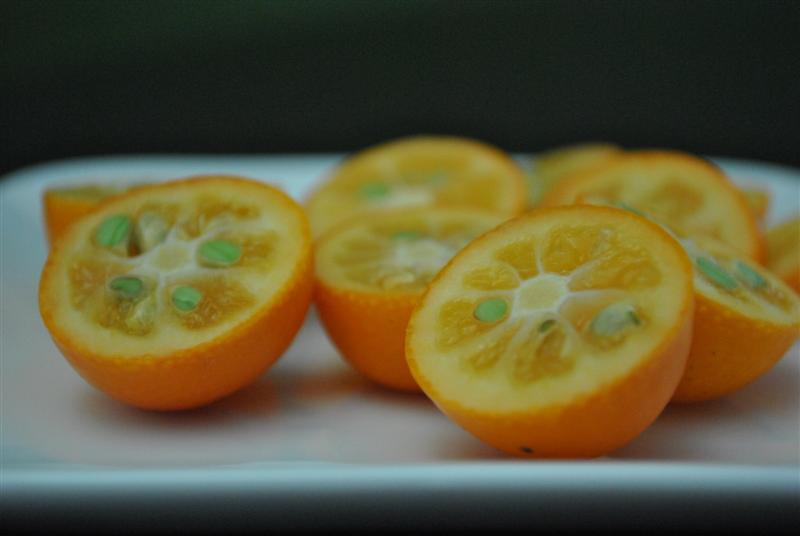 Kumquat 'Miewa'-1277