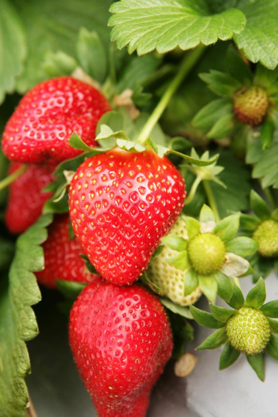 Strawberry 'Sweet Charlie'-0