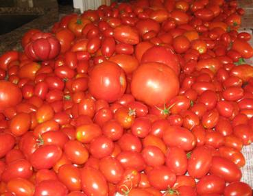 Pre order Tomato Plants- pick up April 8