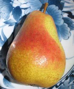 Pear 'Warren'-1360