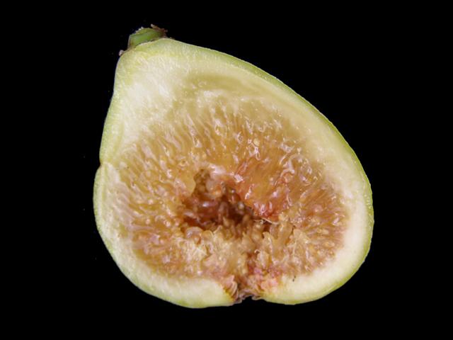Fig 'White Marseille'-1260