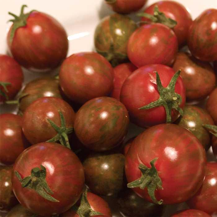 Tomato 'Zebra Cherry'-0